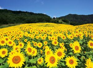 三ノ倉高原花畑