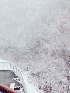 本日のお天気⇒雪!